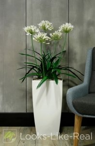 African Lily (White) 1150/650mm Artificial Office Plant